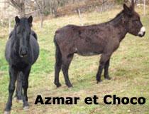 Azmar et Choco, les animaux de compagnie du gîte